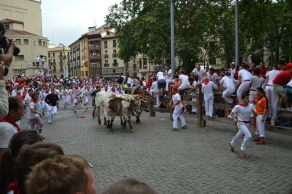The leading bulls.